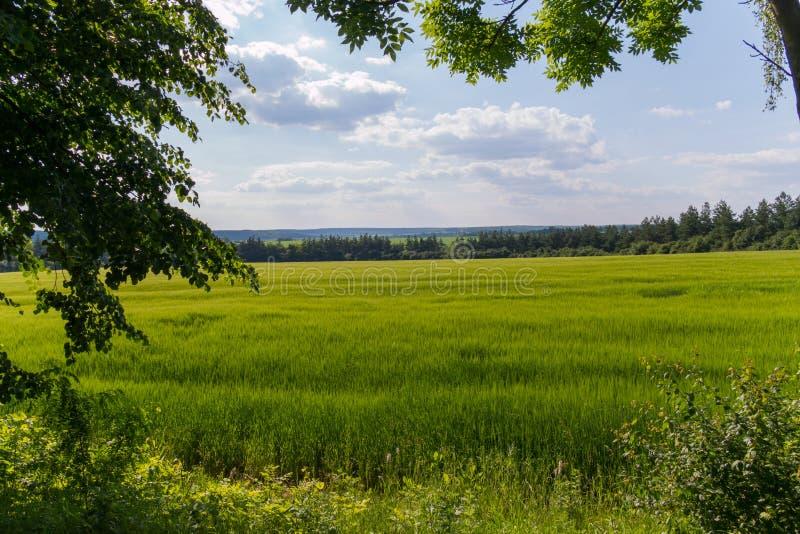 Ajardine con un prado verde con una hierba joven jugosa rodeada por los árboles contra un cielo nublado azul Banco de piedra cont imagen de archivo