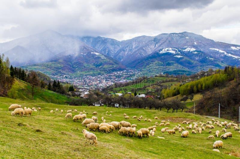Ajardine del pueblo de Prundu Bargaului, condado de Bistrita Nasaud, Transilvania imagenes de archivo
