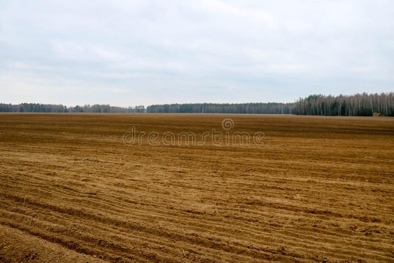 Ajardine el campo, tierra para arar con las cosechas en el fondo del bosque imagen de archivo
