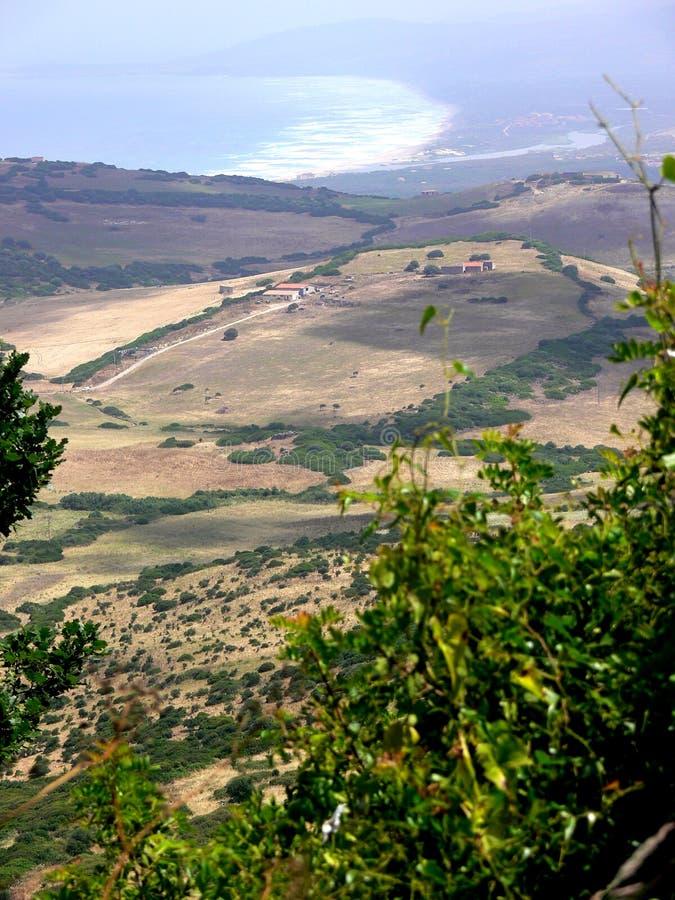 Ajardine el panorama con las colinas y los árboles de pino y la costa de mar en el fondo foto de archivo libre de regalías