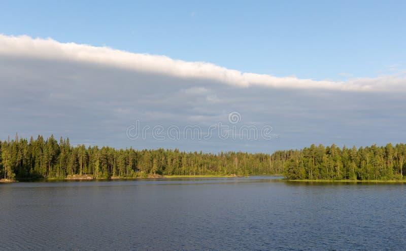 Ajardine en la orilla de un lago del bosque imagenes de archivo