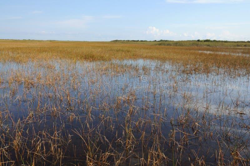 Ajardine en los marismas, la Florida foto de archivo