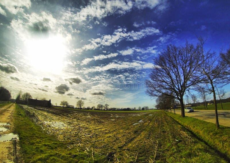 Ajardine a foto de um campo no Sun foto de stock royalty free