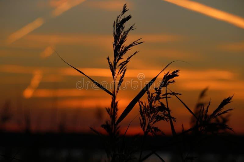 Ajardine la puesta del sol fantástica en el resplandor de los rayos de sol del campo de trigo imagen de archivo