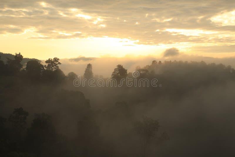 Ajardine la vista de la selva tropical en niebla en la mañana en la montaña, Doi imágenes de archivo libres de regalías