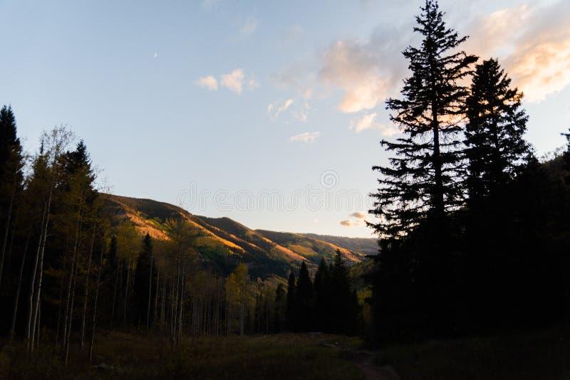 Ajardine la vista del follaje de otoño en las montañas cerca de Vail, Colorado fotografía de archivo libre de regalías