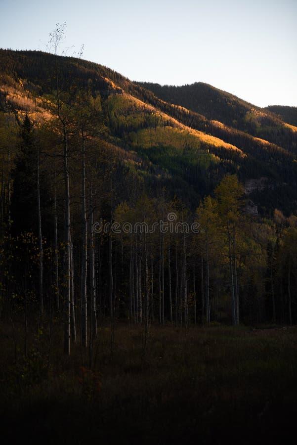 Ajardine la vista del follaje de otoño en las montañas cerca de Vail, Colorado imagen de archivo libre de regalías