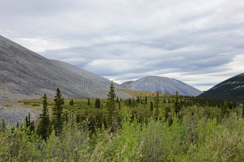 Ajardine a lo largo de la carretera de Dempster cerca del parque territorial de la piedra sepulcral, Canadá foto de archivo