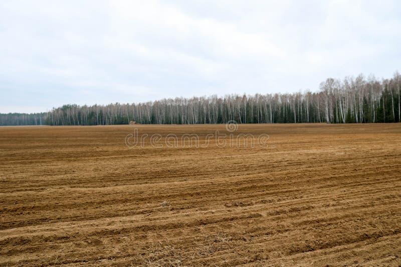 Ajardine os campos, terras com as camas para arar com as colheitas no fundo da floresta imagem de stock