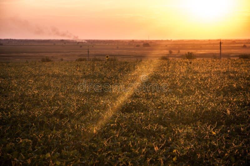 Ajardine, puesta del sol soleada hermosa en un campo imagen de archivo