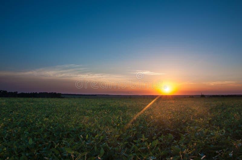 Ajardine, puesta del sol soleada hermosa en un campo fotos de archivo libres de regalías