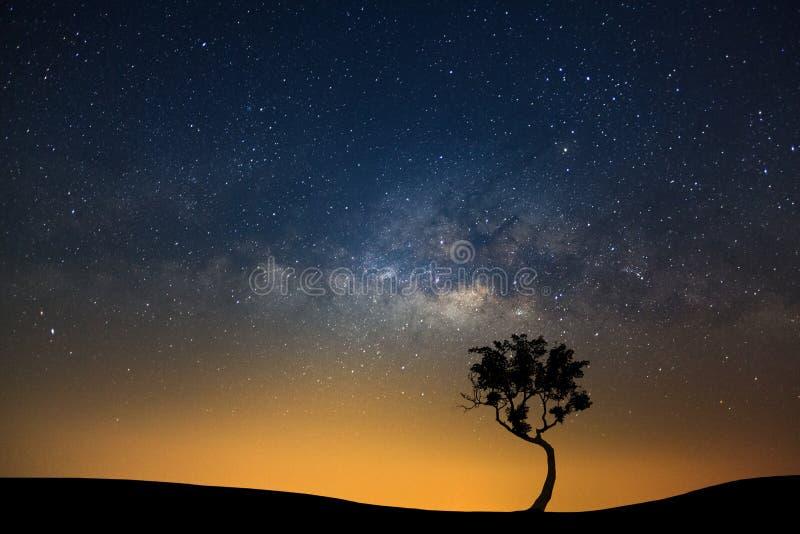 Ajardine a silhueta da árvore com galáxia da Via Látea e dus do espaço foto de stock
