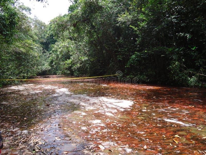 ajardine verde da Venezuela de amazon do savana do parque o grande naturalmente fotografia de stock royalty free