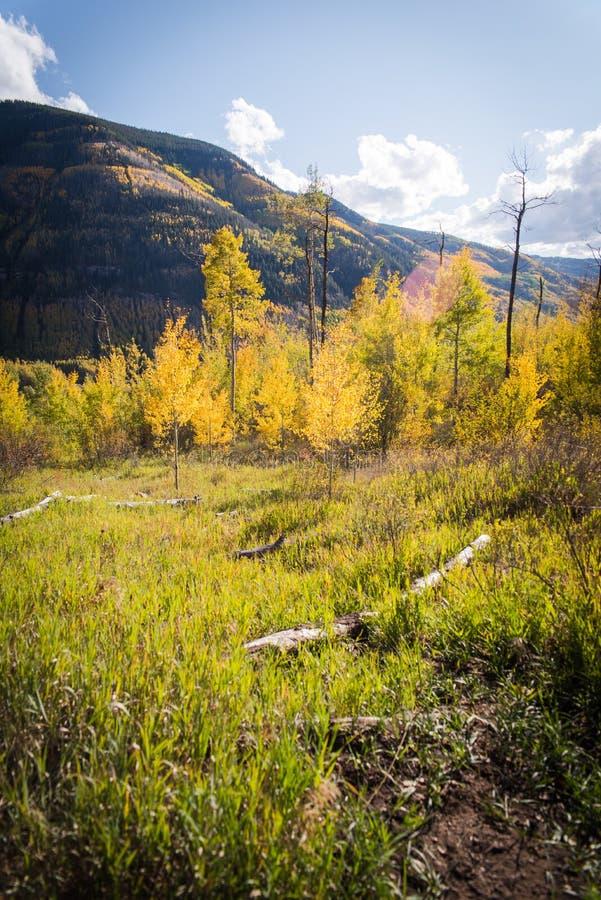 Ajardine a vista da folhagem de outono nas montanhas perto de Vail, Colorado imagens de stock royalty free