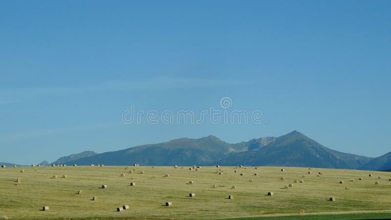 Ajardine a vista da montanha Tatras alto, Eslováquia imagem de stock royalty free