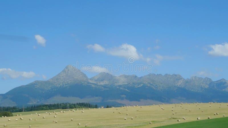 Ajardine a vista da montanha Tatras alto, Eslováquia imagens de stock royalty free