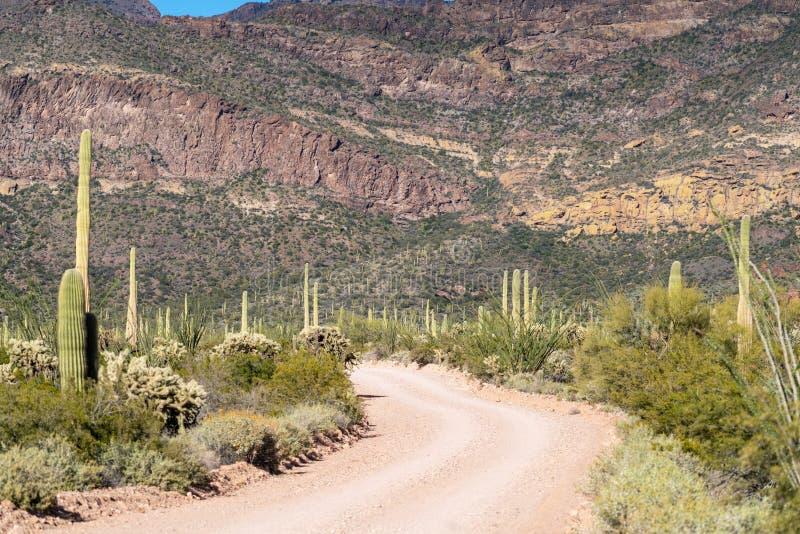 Ajo góry przejażdżka, niebrukowana droga gruntowa przez Organowej drymby Kaktusowego Krajowego zabytku Sagurao kaktusa linia drog obrazy royalty free