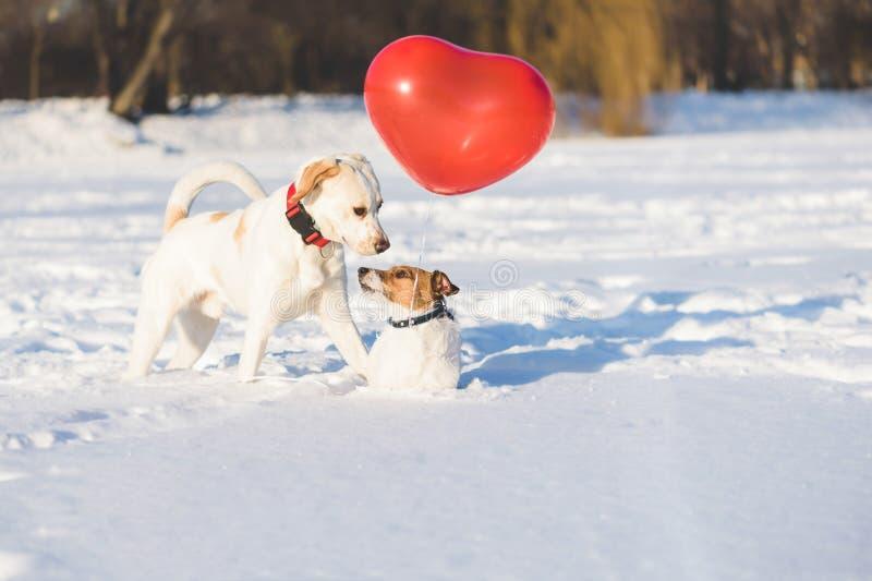 Ajouter heureux de chien au ballon à air en forme de coeur en tant que concept de jour de valentines photographie stock