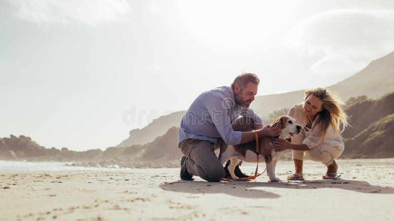 Ajouter mûrs au chien sur la plage photos libres de droits