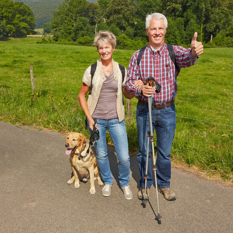 Ajouter supérieurs au chien en nature image libre de droits
