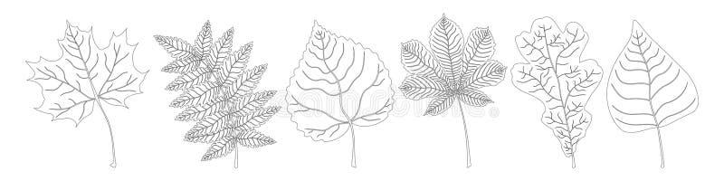 Ajustado para colorir das folhas preto e branco do bordo, da cinza de montanha, do Linden, da castanha, do carvalho e do vidoeiro ilustração stock