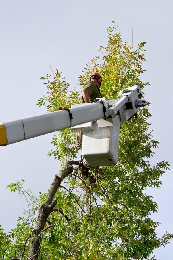 Ajustador da árvore foto de stock