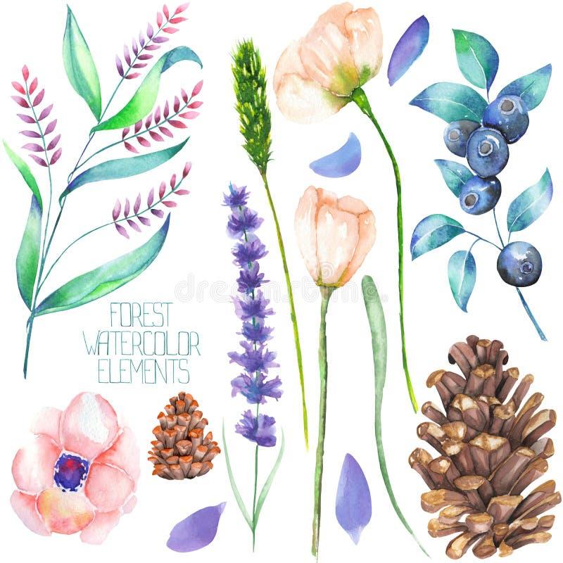 Ajuste, coleção com os elementos isolados da floresta da aquarela (bagas, cones, alfazema, wildflowers e os ramos) ilustração do vetor