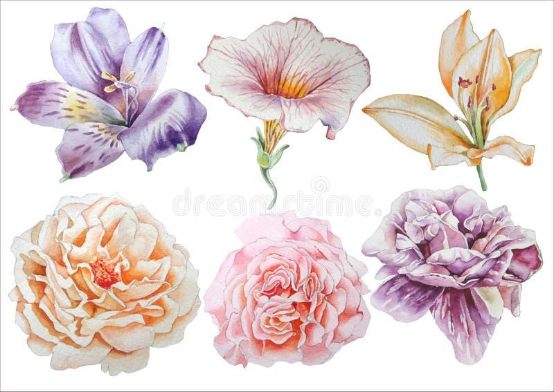Ajuste com flores Rosa Alstroemeria pansies Peônia lilia Ilustração da aguarela ilustração stock