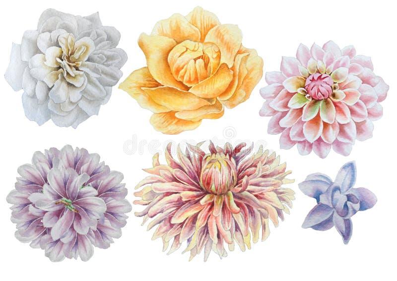 Ajuste com flores Rosa Peônia dahlia Ilustração da aguarela ilustração royalty free