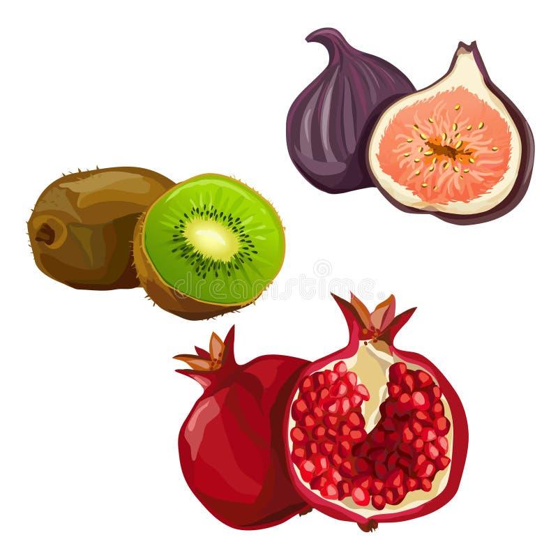 Ajuste com vário fruto ilustração royalty free