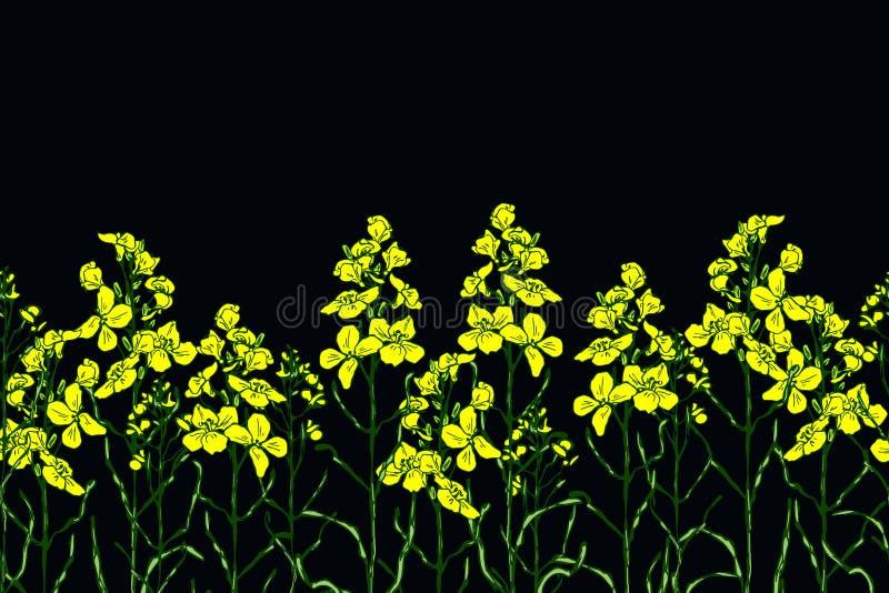 Ajuste da flor e do óleo do canola ilustração royalty free