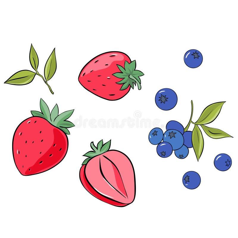 Ajuste da morango e do mirtilo isolados no fundo branco Vetor ilustração do vetor