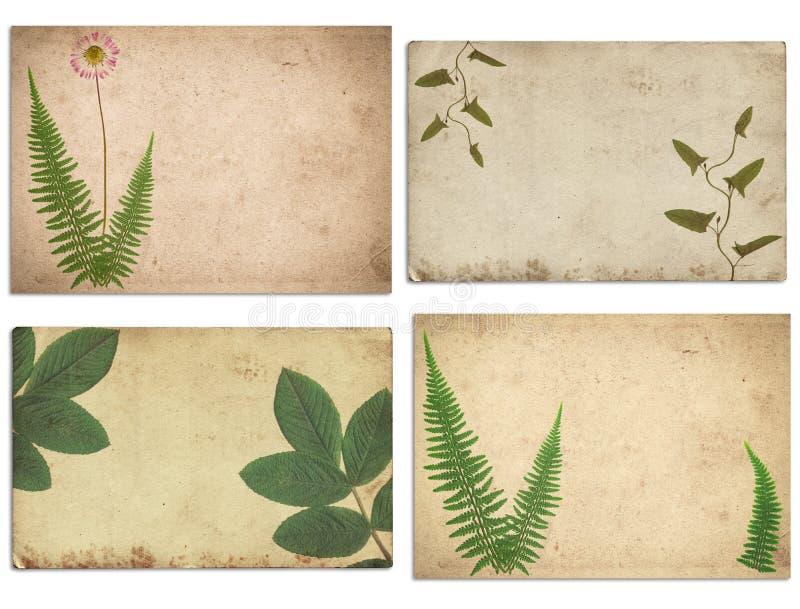 Ajuste da vária textura velha do papel do vintage com plantas secas e a flor isoladas ilustração do vetor