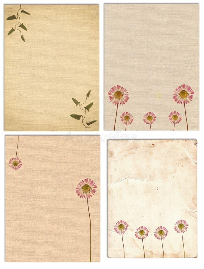 Ajuste da vária textura velha do papel do vintage com plantas secas e a flor isoladas ilustração royalty free