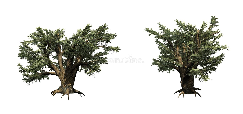 Ajuste das árvores de Cedar Of Lebanon ilustração do vetor
