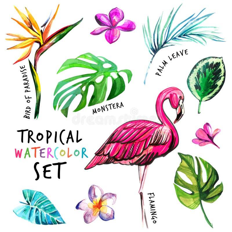 Ajuste das flores da aquarela e as folhas e flamingo tropicais ilustração royalty free