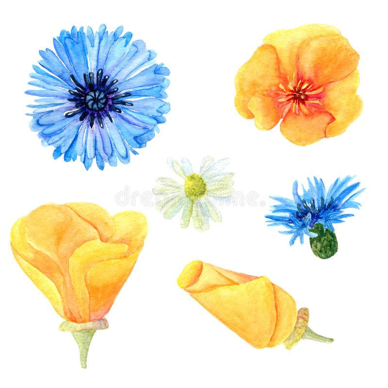 Ajuste das flores do prado do verão da aquarela ilustração royalty free