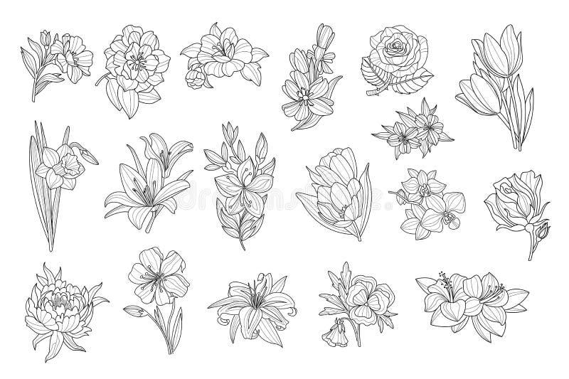 Ajuste das flores monocromáticas bonitas Lírio, tulipa, peônia, rosa, narciso amarelo, calendula, amor perfeito, petúnia Ícones e ilustração stock