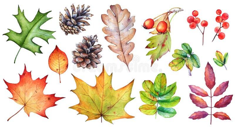 Ajuste das folhas de outono, das bagas e dos cones do pinho no fundo branco ilustração do vetor