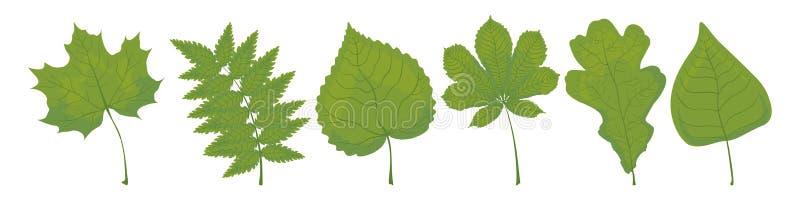 Ajuste das folhas verdes do bordo, do Rowan, do Linden, da castanha, do carvalho e do vidoeiro em um fundo branco ilustração do vetor