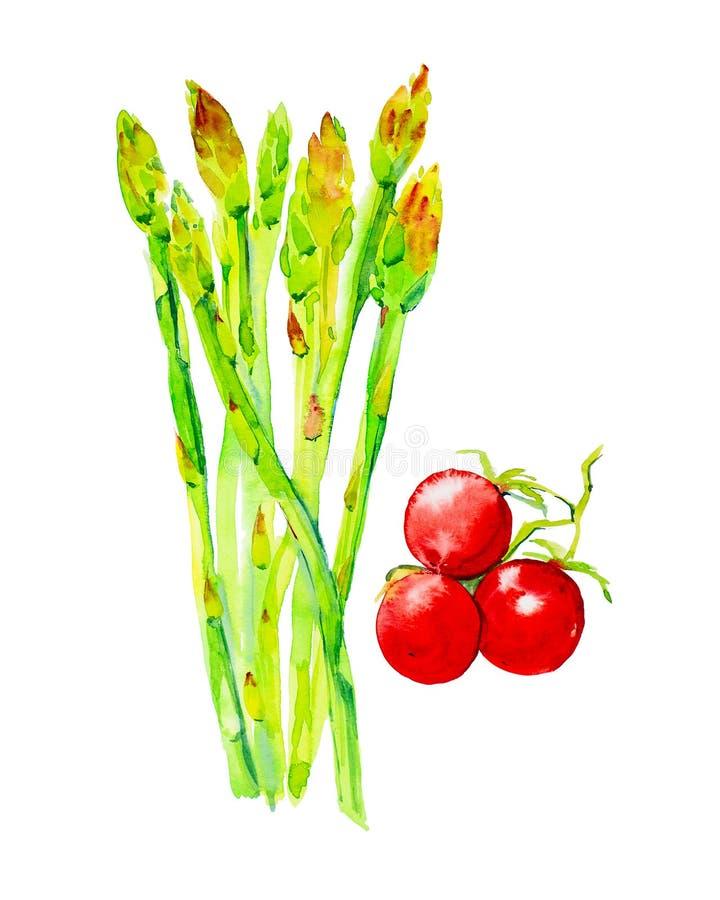 Ajuste das hastes do aspargo e dos tomates Ilustra??es da aquarela isoladas no fundo branco imagens de stock royalty free