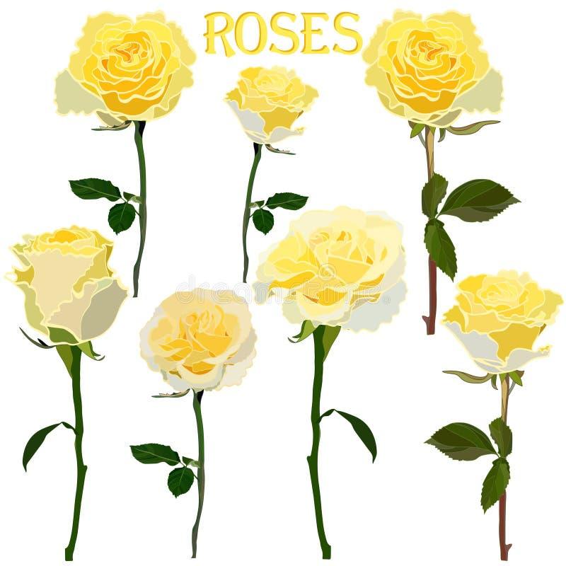 Ajuste das imagens de rosas amarelas em uma haste isolada em um fundo branco ilustração stock