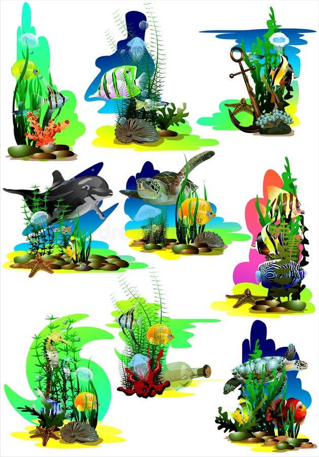 Ajuste das imagens do mundo subaquático tropical em um fundo branco ilustração stock