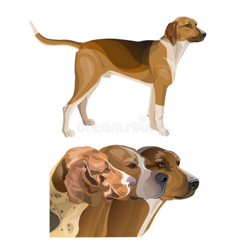 Ajuste das imagens do perfil do cão de caça ilustração royalty free