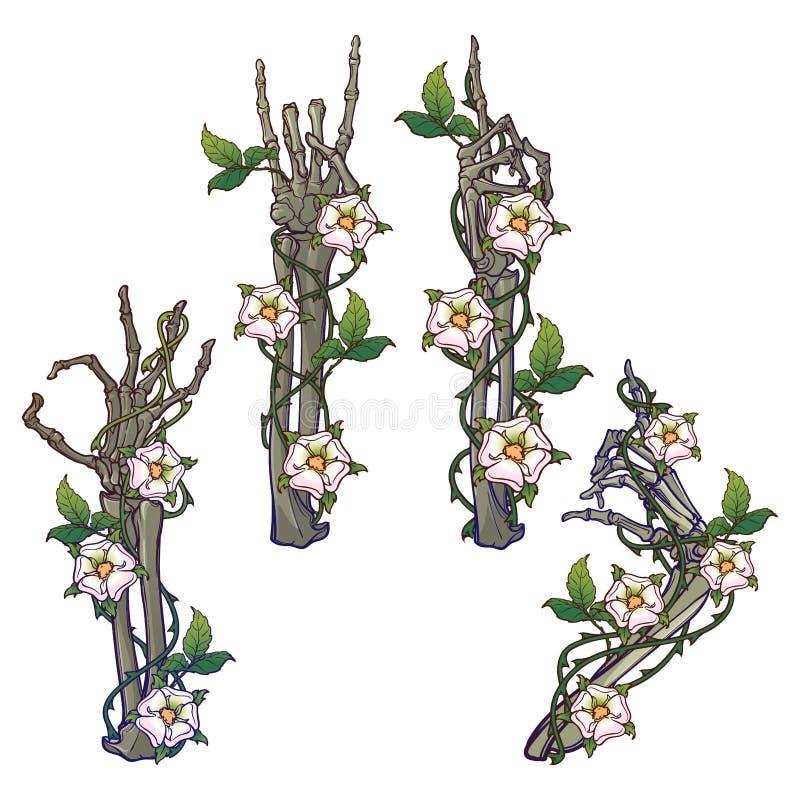 Ajuste das mãos de esqueleto com vários gestos decoradas com festões da cão-rosa Desenho linear colorido isolado no branco ilustração do vetor