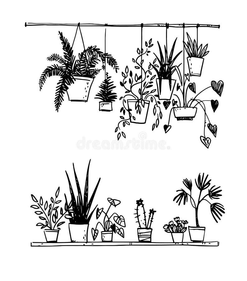 Ajuste das plantas em pasta da casa, esboço do vetor ilustração do vetor