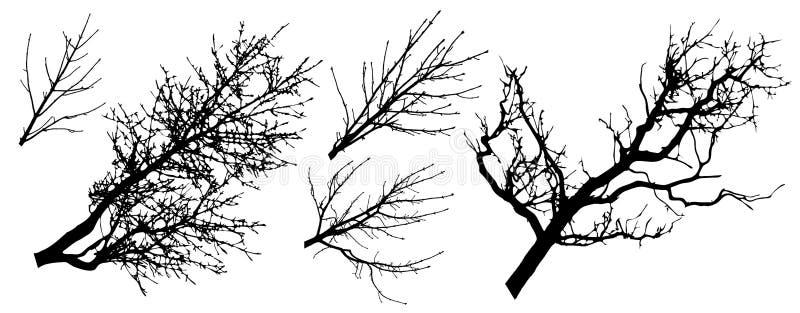 Ajuste das silhuetas dos ramos de árvore, ilustração do vetor ilustração do vetor