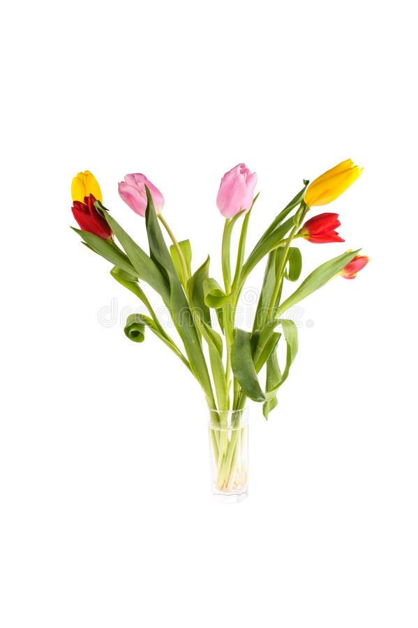 Ajuste das tulipas diferentes da cor isoladas no fundo branco, estação de mola imagens de stock