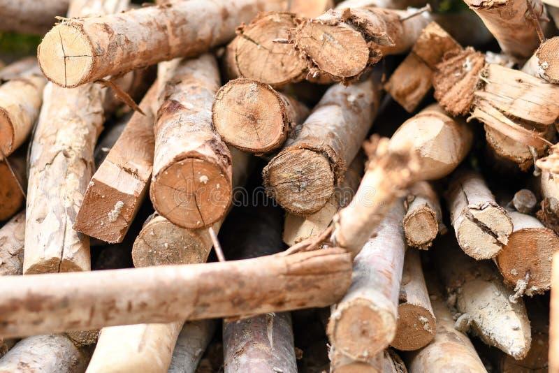 Ajuste de muitas madeiras do log fotografia de stock