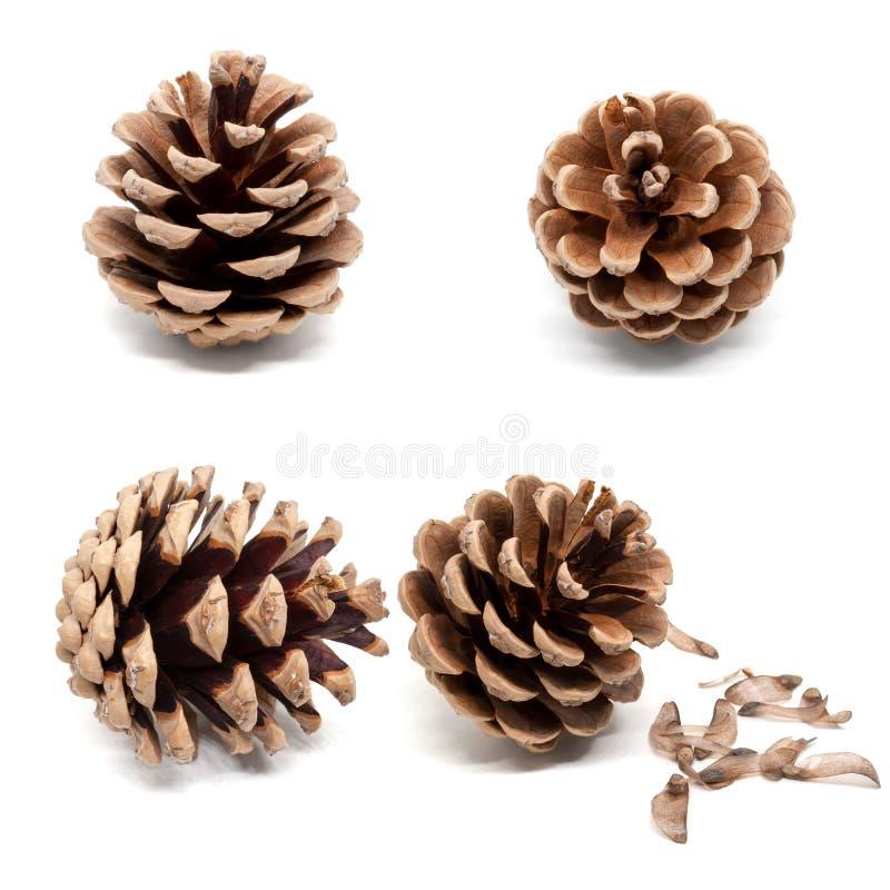 Ajuste de quatro cones secos do pinho marrom com a sombra isolada no fundo branco fotos de stock royalty free